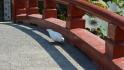 23_tempel13.jpg