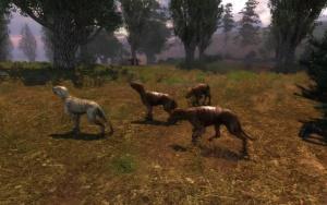 Recht harmlose Schattenhunde