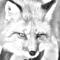 Bild von H-Fox